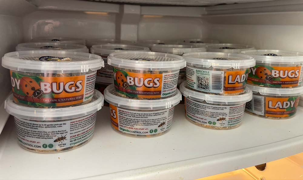 Containers of ladybugs