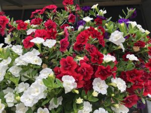 Red and White Hanging Basket